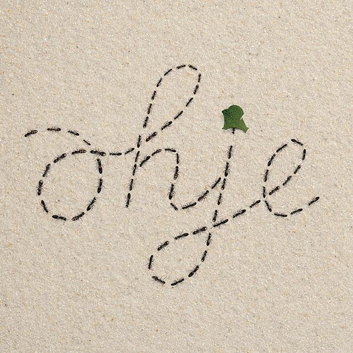 """Ameisen schreiben das Wort """"Ohje"""""""