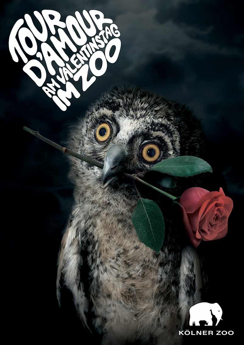 Tour d´Amour am Valentinstag im Zoo - Uhu mit einer Rose im Mund